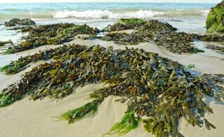 algues-environnement-energie